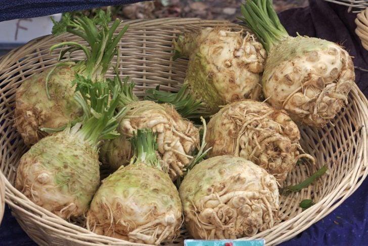 types celery varieties leaf celeriac