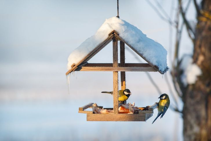 open design birdhouse snow