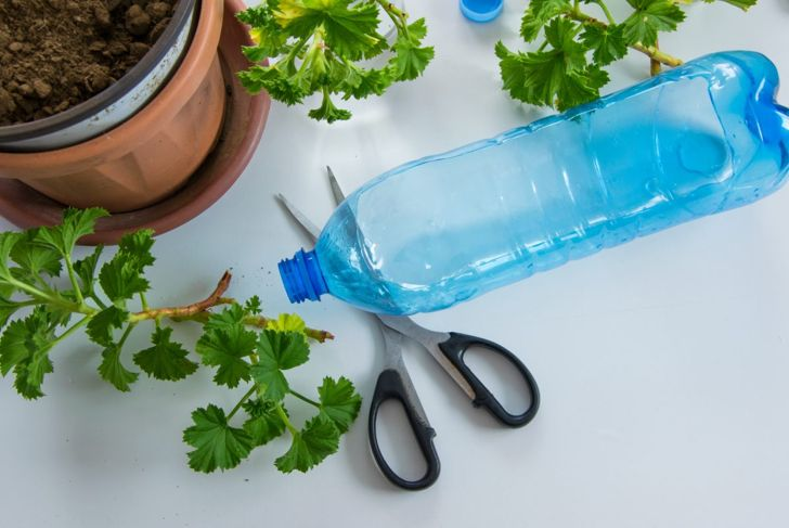 Take care when cutting the bottle as any holes could allow the wasps to escape.