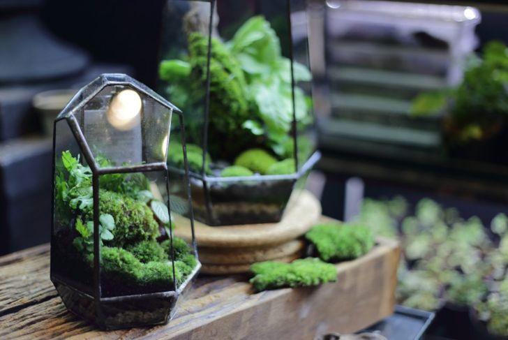 glass terrarium with ferns