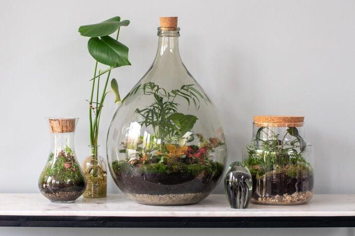 corked bottle terrariums