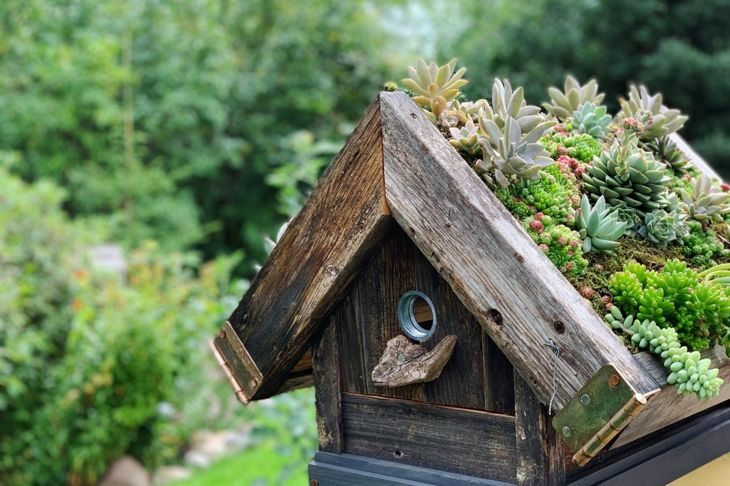 garden succulents birdhouse