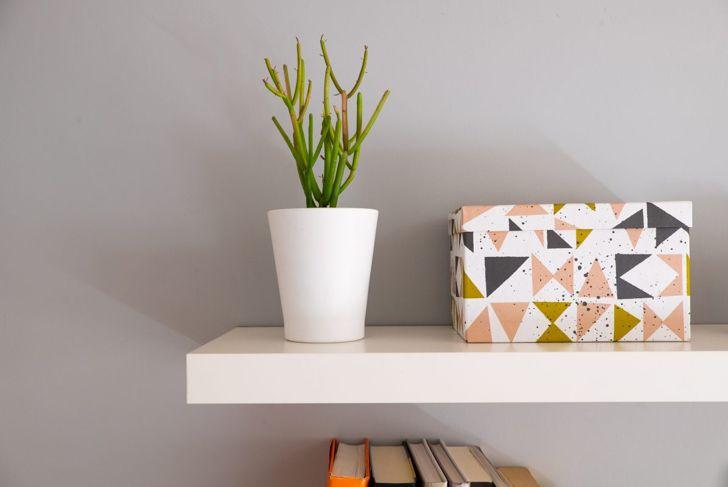 dorm, plant, greenery, decoration