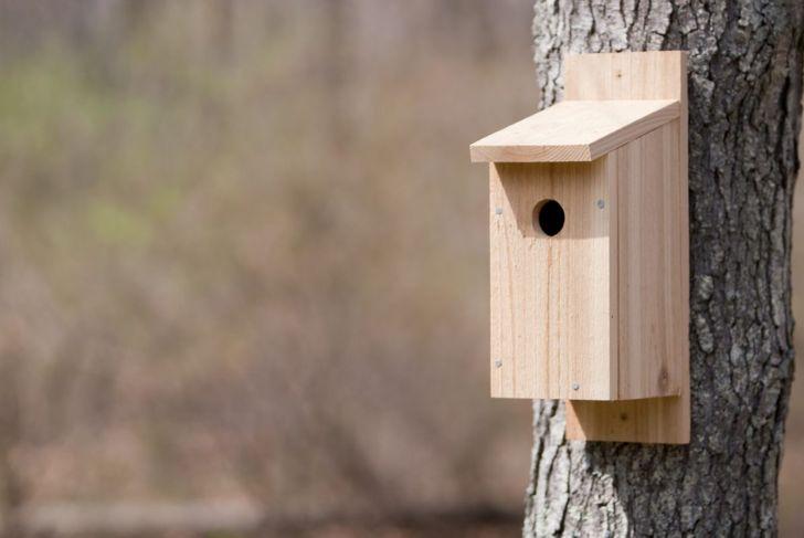 basic wood birdhouse