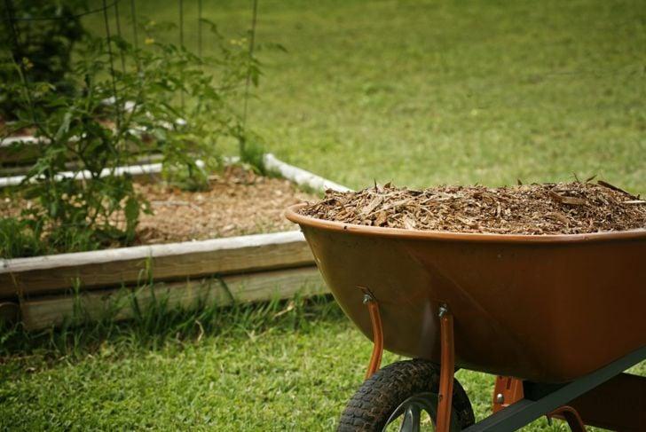 beneficial compost tomato