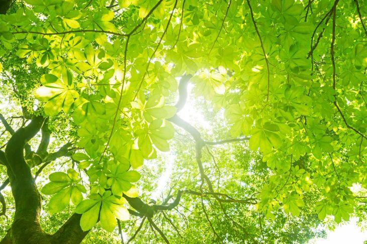 tree green sunlight