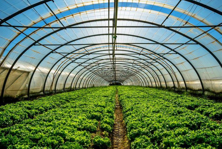 greenhouse plant growth