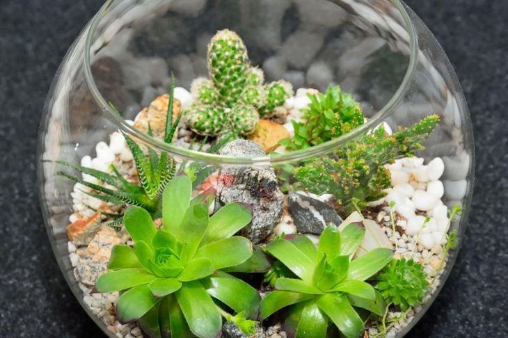 cactus and succulent glass terrarium