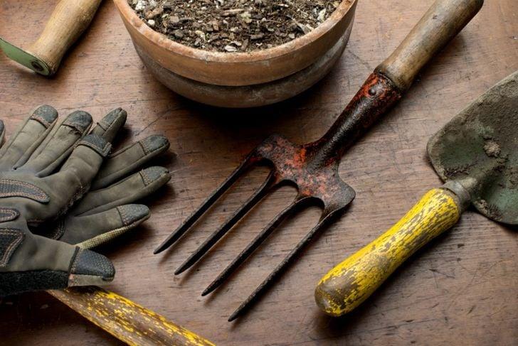 cilantro soil
