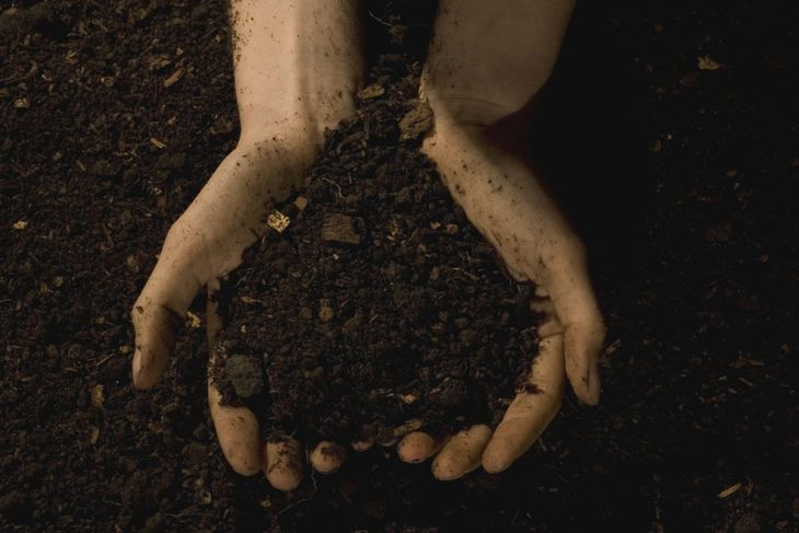 Person holding rich garden soil