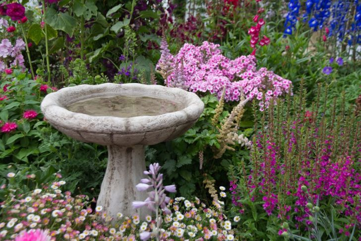 birdbath surrounded by flowers