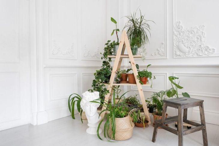 variety plants stand pyramid ladder