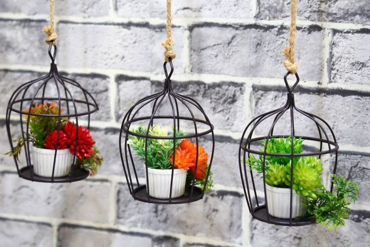 Hang plants in a birdcage