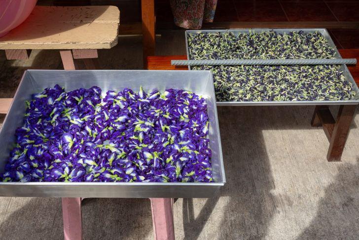 tea culinary traditional medicine flowers