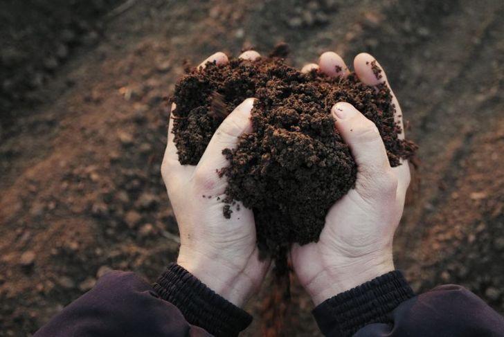 light airy soil for milkweed plant