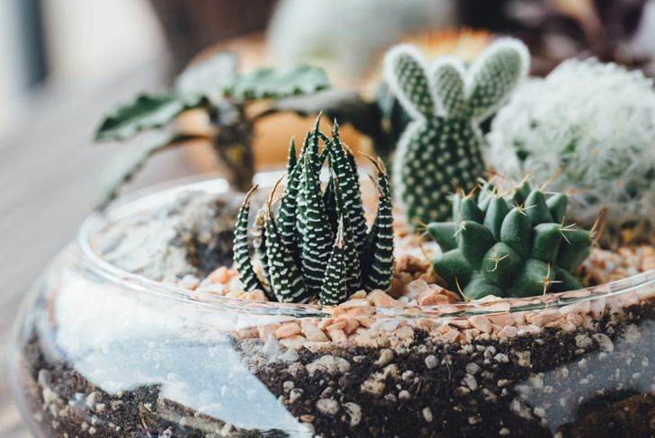 be creative with the contents of your terrarium