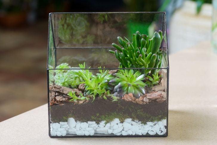 rocks for terrarium drainage