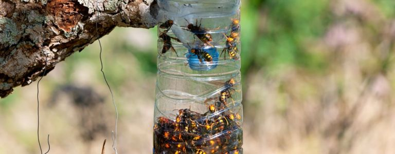 Keep the Pests Away With a Humane Wasp Trap