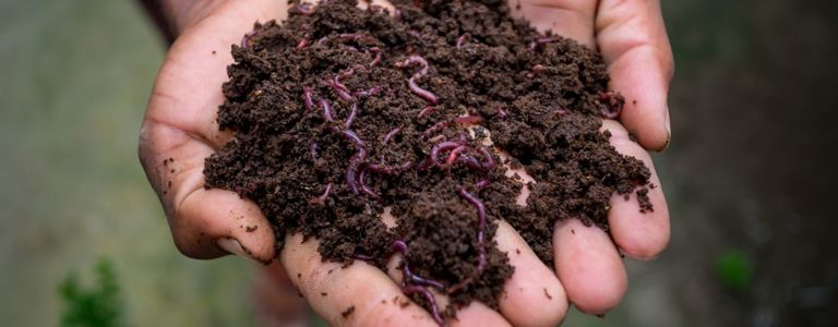 A Beginner's Guide to Building a Worm Farm