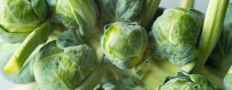 Tips for Successfully Growing Brussels Sprouts