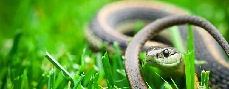 From Sulfur to Smoke: Simple DIY Snake Repellents
