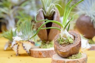 A Crash Course in Air Plant Care