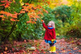 Beautiful Maple Trees for Every Yard