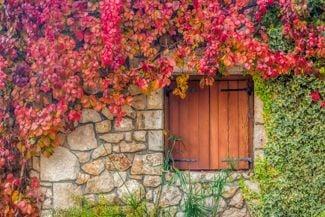 Fall in Love with Virginia Creeper's Autumn Foliage