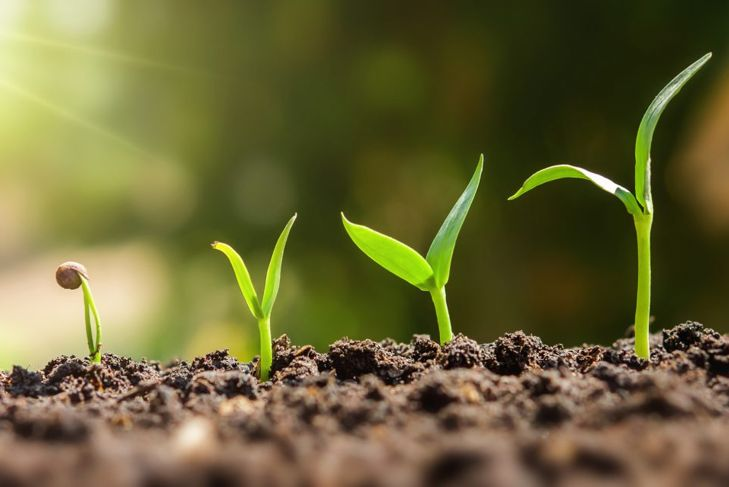 Durable and packed with nutrients, bone meal will help your garden go the distance.