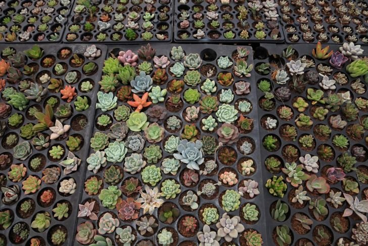 You can propagate many types of succulent just from their leaves.