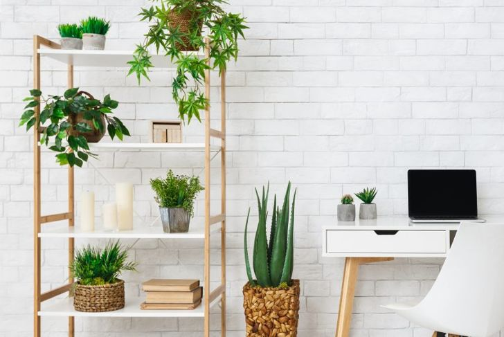 home office, plants