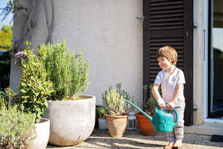 boy watering rosemary in containers