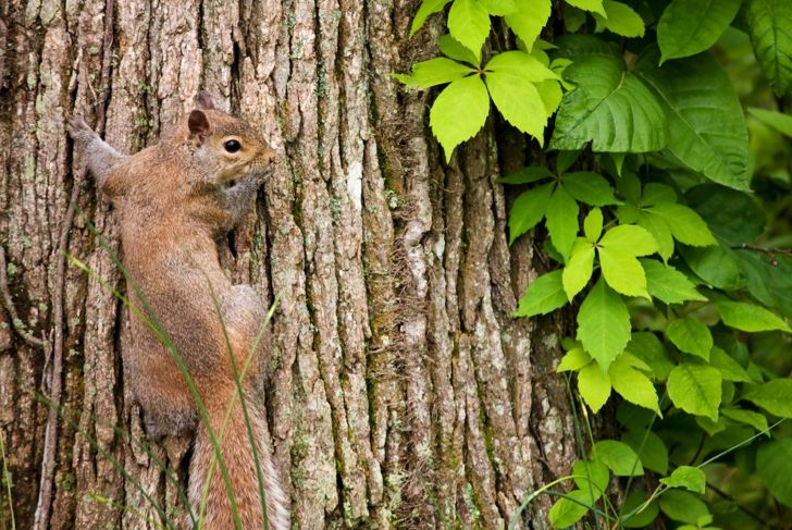 wildlife eat fruit stems squirrel