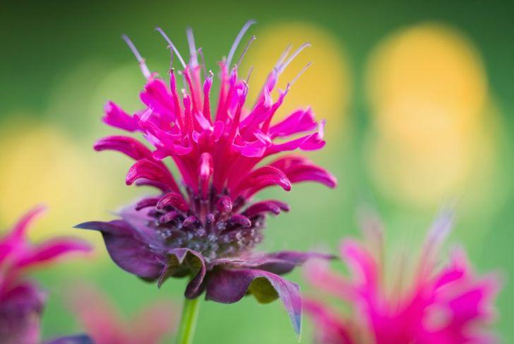 full sun beautiful vivid blooms