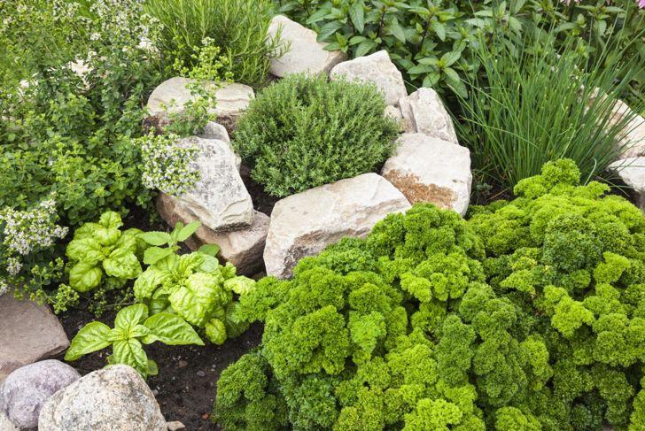 fresh scented herb tea garden