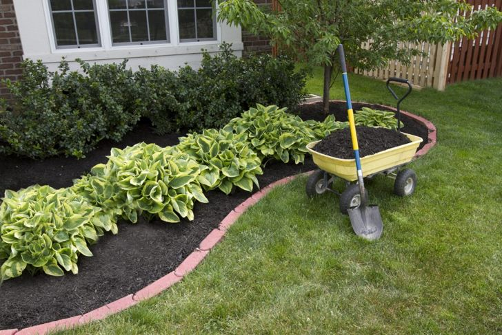 Home landscaping featuring freshly planted hostas.