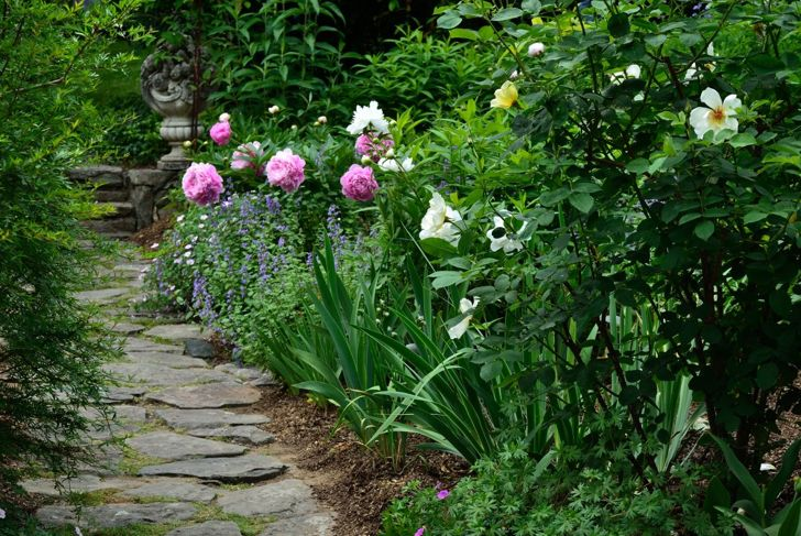 Leave room for air to circulate when planting peonies.