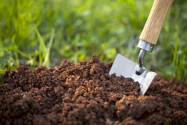 Soil for rose plant.
