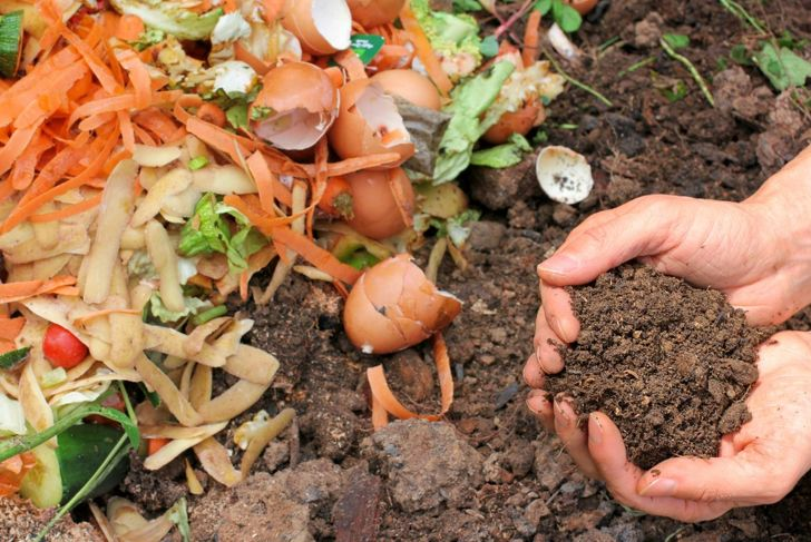 Kitchen scraps waiting to be composted.