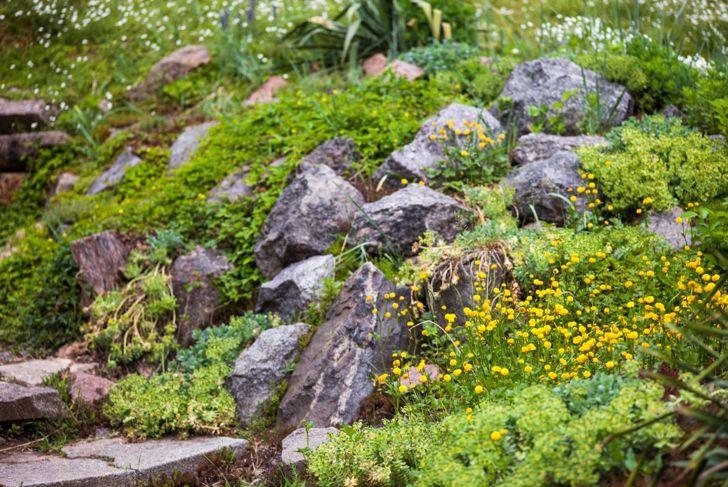 inclines hills landscaping slope garden