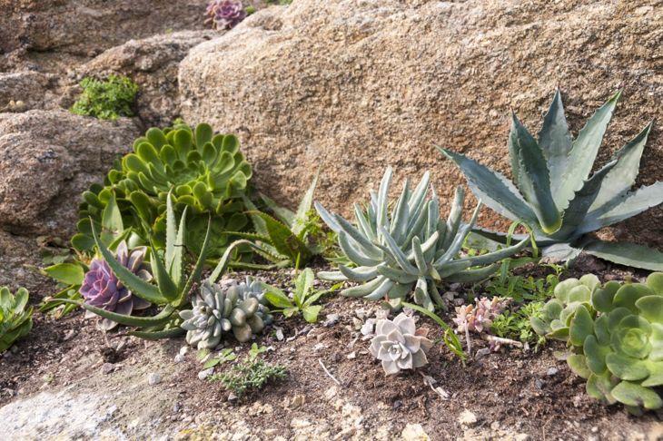 dry rock garden desert