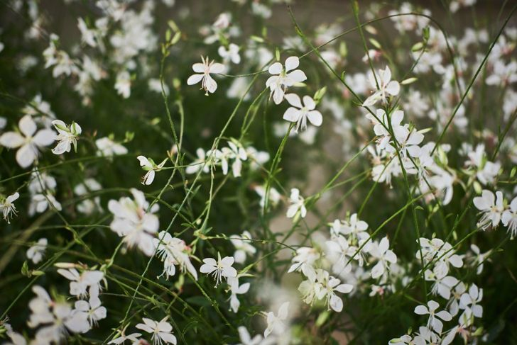 Give your star jasmine some freedom, and watch how far it will go.
