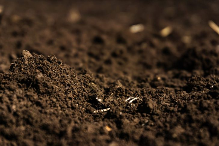 sandy organic mix potting soil