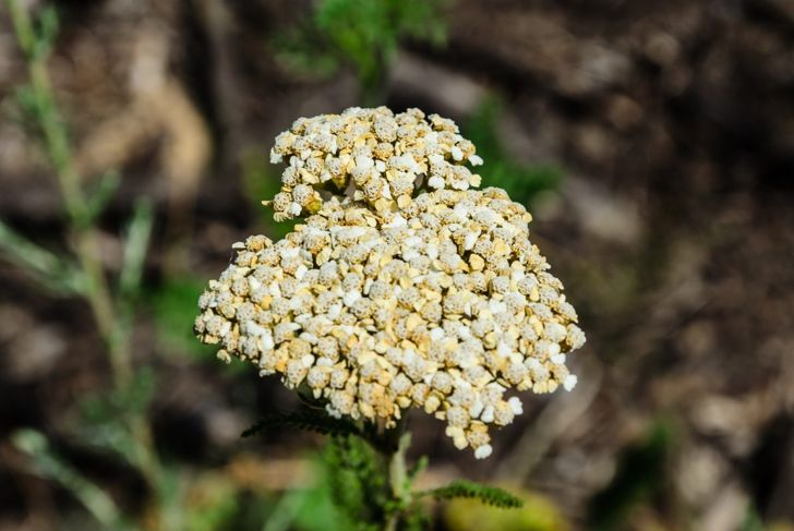 deadhead fade die flowers