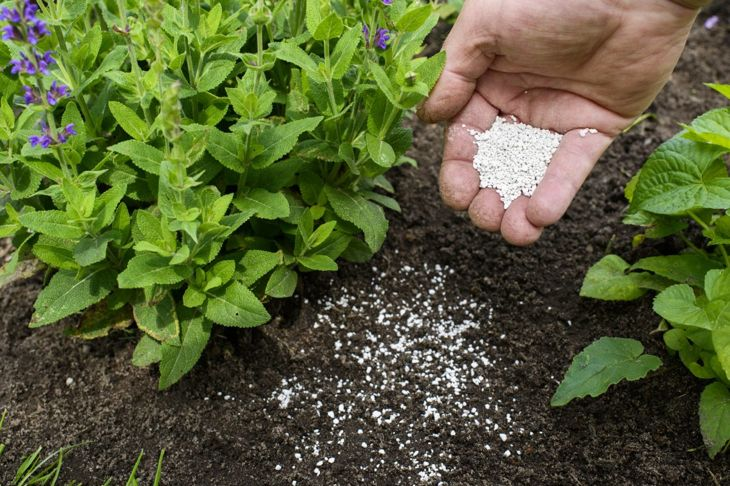 Bone meal is the perfect way to enhance your soil's phosphorus content