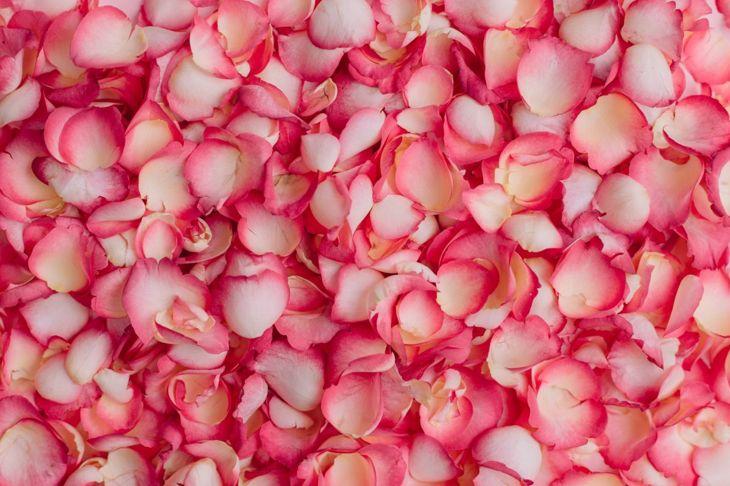 Beautiful, fragrant and edible rose petals.