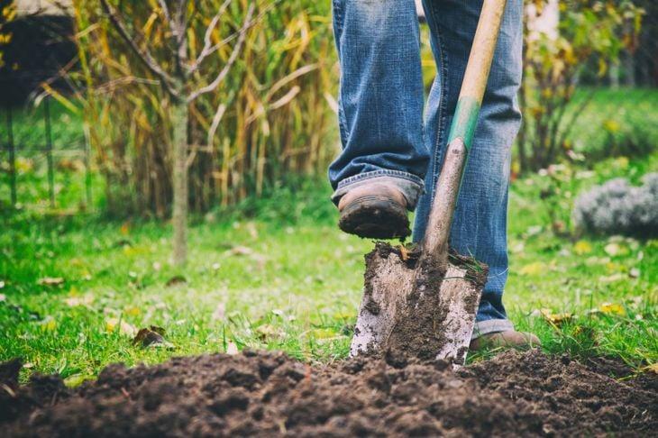 Gardener digging in rich, deep soil.