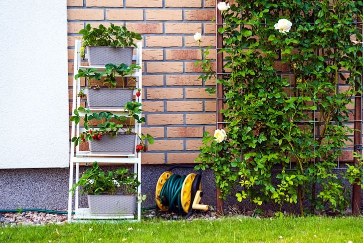 plant shelf backyard garden