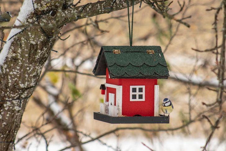 backyard bird feeder