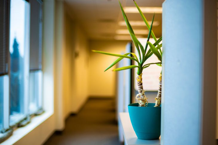 office cubicle plant